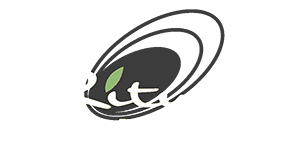 Ritual Skin and Body Care